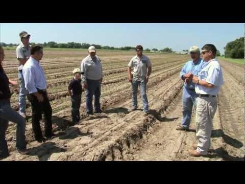 Louisiana Sugarcane Farmer - America