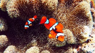 Snorkeling Nugu Beach, Central Province, Solomon Islands