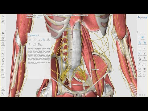 3D Organon Anatomy for Desktop (v3.0)