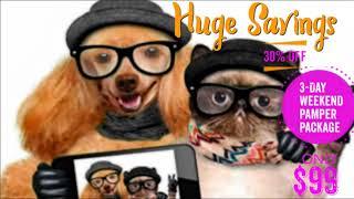 Dog Boarding Kennels Near Me: Pet Pamper Deal On Gold Coast!