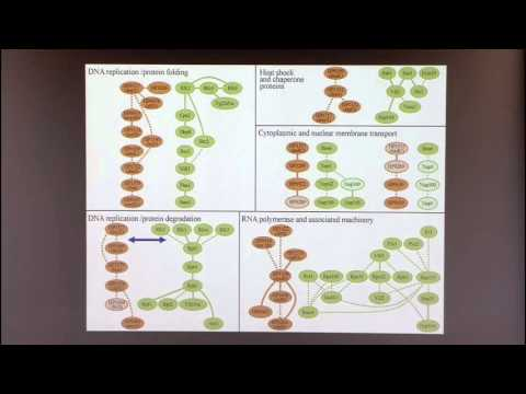 Introduction to Biological Network Analysis IV: Network Alignment and Querying