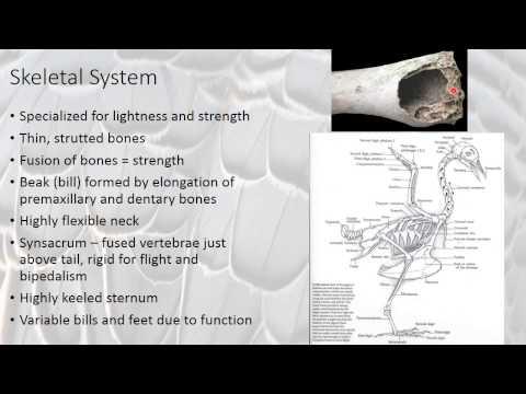 Bird Physiology