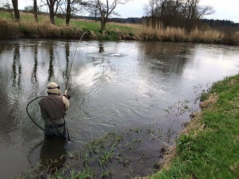 Atlantic Salmon on the Fly   Ashley Power Lie  Somerley Estate   Hampshire Avon