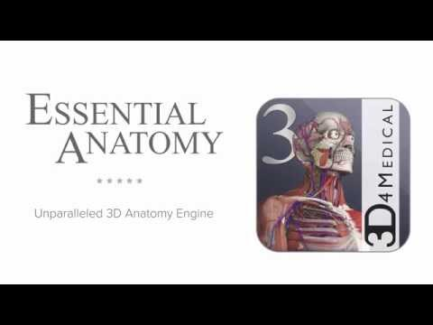 Essential Anatomy 3 - Apps on Google Play