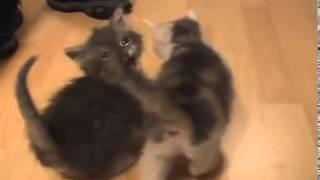 Котята МяУ!