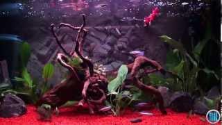 60 l Aquarium with Beta Splendens