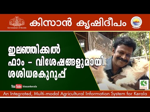 Farm Tourism Initiatives By Sasidharakuruppu At Elanjikkal Farm, Kilimanoor In Thiruvananthapuram