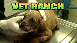Broken Leg Pup and a Mange Pup