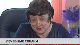 Лечебные собаки. Новости 15/03/2018. GuberniaTV