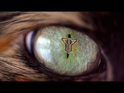 Smash Into Pieces - Animal (PROMO VIDEO)