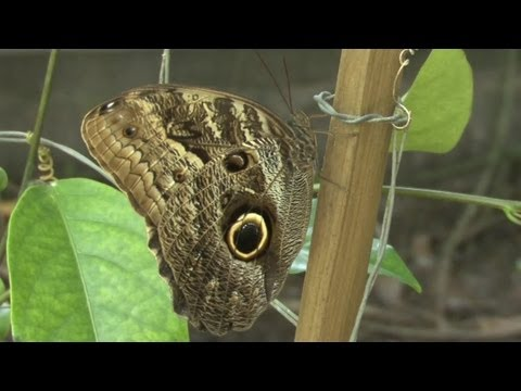 Neotropical Butterfly Park Suriname