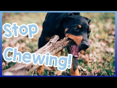 how-to-stop-your-dog-chewing!-tips-to-combat-dogs-chewing!