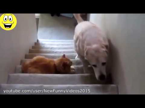 Best Funny Videos Dogs scared of cats Funny animal compilation 2016