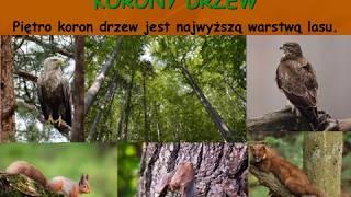 Las  jako środowisko życia organizmów