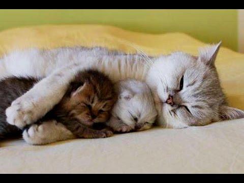 Los Gatos más Cariñosos del mundo! Gatos que Abrazan!!