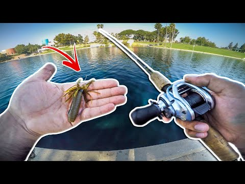 Fishing A Tiny Urban Pond In Los Angeles (BIG BASS) !!