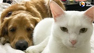 Cat And Dog Have Totally Changed Their Moms' Lives | The Dodo