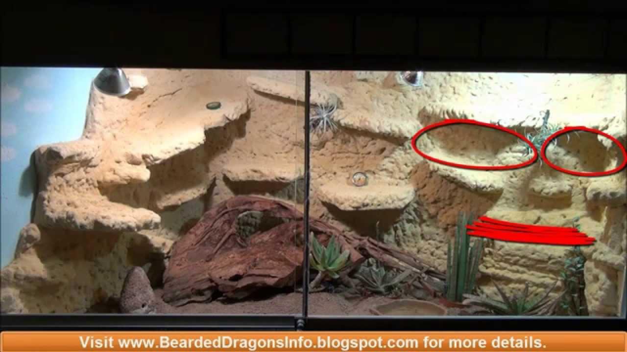& Light design for my desert terrarium for my bearded dragon - YouTube azcodes.com