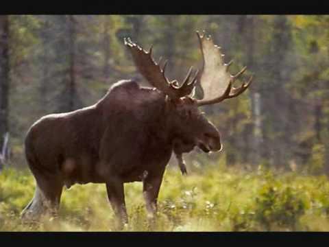 Partie de chasse en sologne 1979 - 2 part 4
