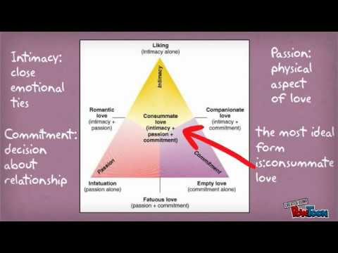Interpersonal relationships ojt