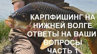 Ловля Сазана Карпа на нижней Волге, дикий Карпфишинг, Карп Сазан рыбалка, Ответы на вопросы часть 1