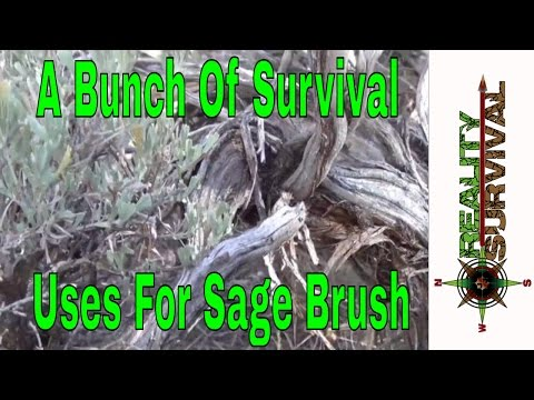 Wilderness Survival Tips: A Few Uses For Sage Brush