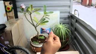 New Mentos Ad - Plant Aalap #FarakPadega
