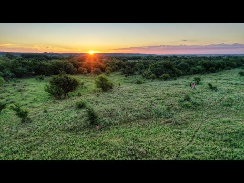 1,580 Acre Hunting And Cattle Ranch For Sale In Wichita County ~ $2,014,500