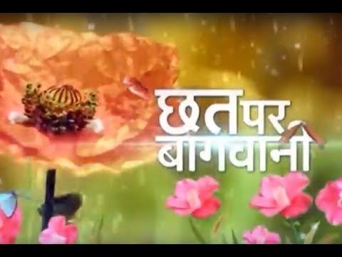 छत्त पर बाग़वानी - All India Kitchen Garden Association - Fruits, Vegetables and Flower Show