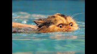 Лучшие ролики про котов. Самые прикольные видео с котами, коты и вода