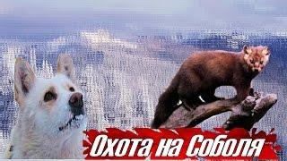 Охота на Соболя в Якутии. Таежные приключения