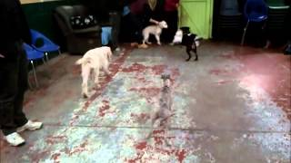 Puppy Play Video
