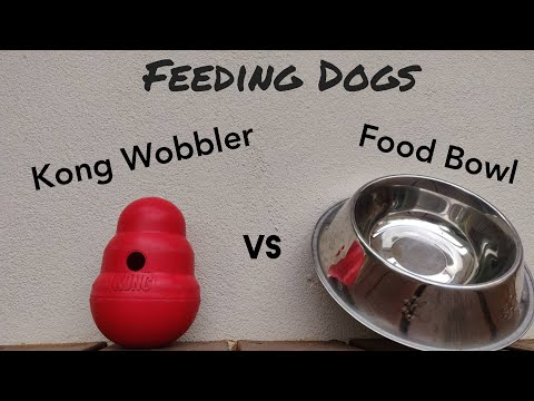 Feeding Dogs - Food Bowl vs Kong Wobbler