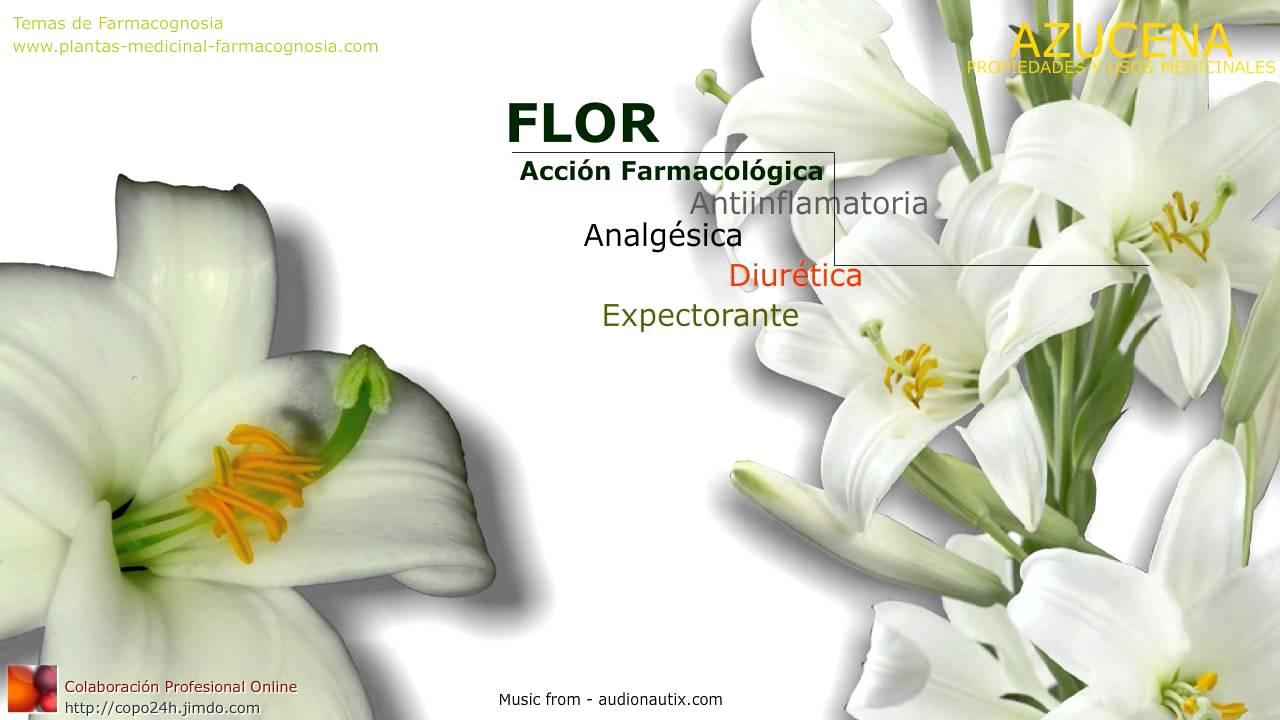 Azucena propiedades y beneficios usos medicinales de la for Planta decorativa con propiedades medicinales