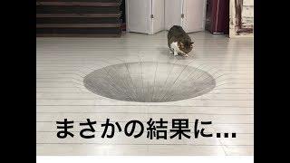 【トリックアート】猫にドッキリを仕掛けてみた!まさかの結果に!!