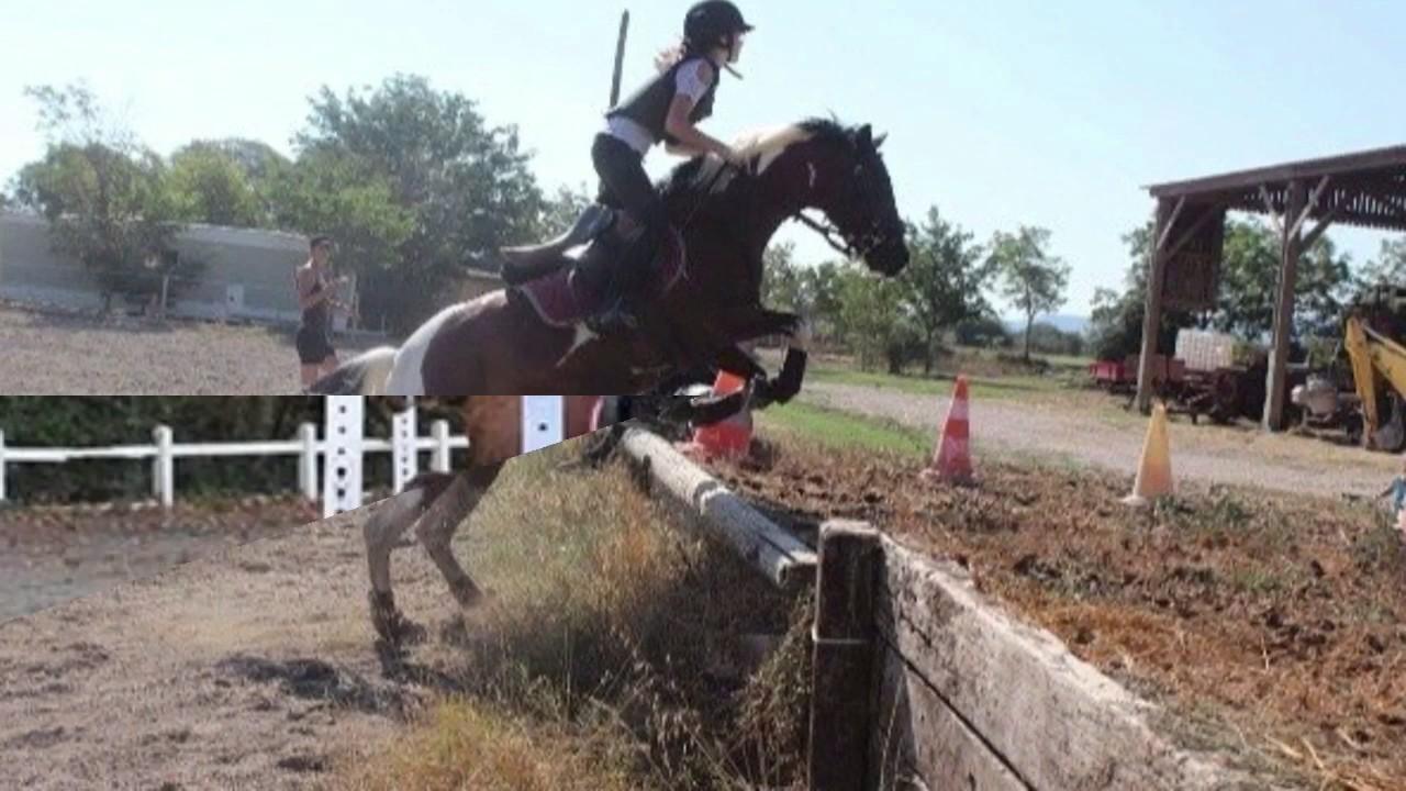Photo de cheval qui saute youtube - Frison qui saute ...