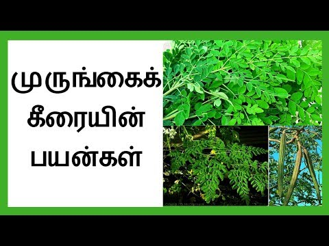 Health benefits of drumstick leaves in tamil │முருங்கைகீரை பயன்கள்│ Moringa Leaves │Tamil Dear