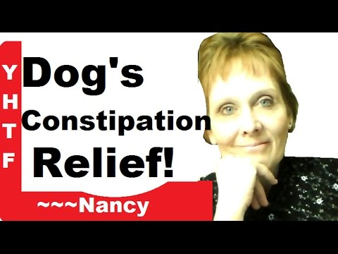 Dog's Constipation ~ Prevention And Relief! My System ~~~Nancy Gurish