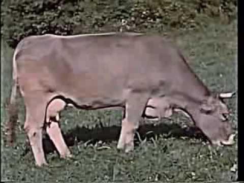 Leben und Arbeit in der Landwirtschaft ca. 1958