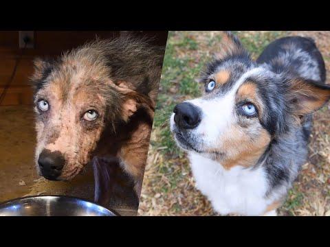 Cassie's Amazing Transformation