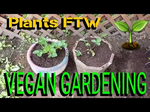 WHOLE FOOD VEGAN GARDENING - PLANT BASED NUTRITION