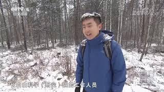 [远方的家]大好河山 火山塑造的温泉美景| CCTV中文国际