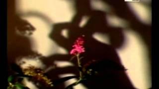 Ombre Cinesi (Raul Ruiz - 1982 Sub. Ita)