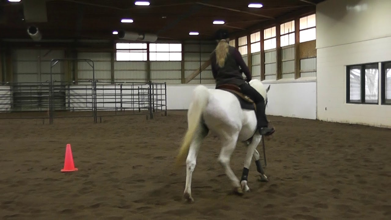 Riding Circles Correctly with Paula Hitzler