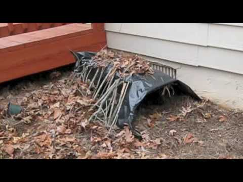 How to trap a fox