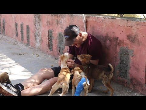 Udaipur, India   Volunteering at Animal Aid Unlimited