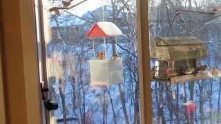 Infinity Bird Feeder Vs. Standard Hopper Style Feeder