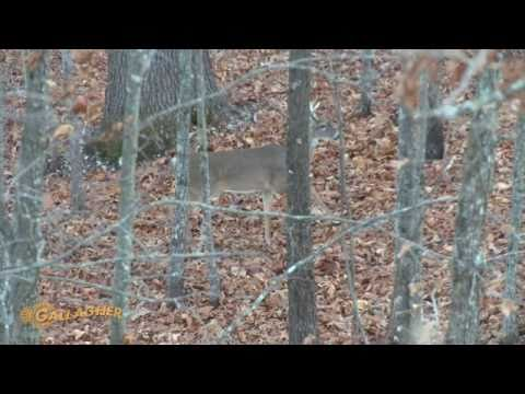 2014 Squirrel Hunting on Public Land from YouTube · Duration:  3 minutes 46 seconds