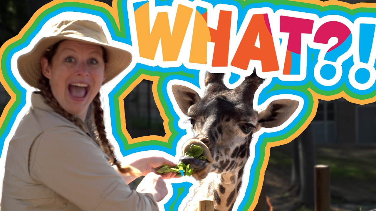 I Can Be What?! | Zookeeper | Part 2 |Giraffe