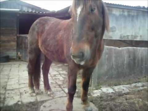 Kippetje the talking horse